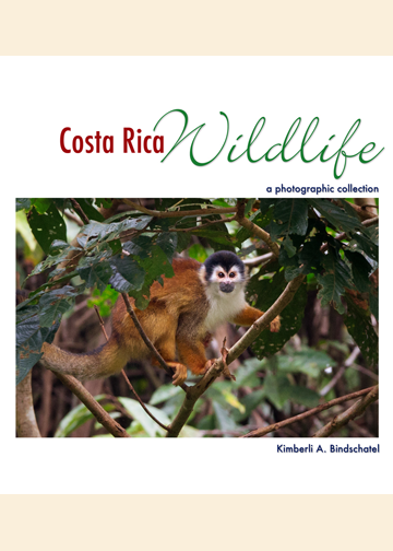 Costa Rica Wildlife: A Photographic Collection